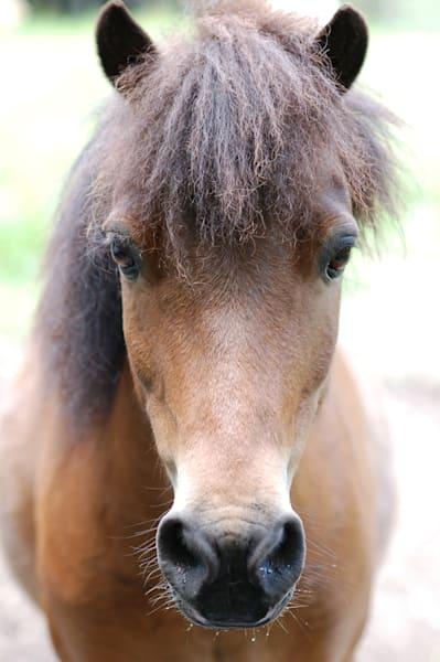 Brown Horse Head