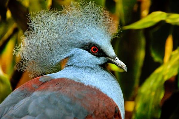 Blue BirdPeriwinkle Blue Feathers