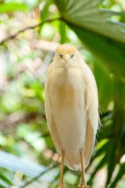 White hawk standing bird