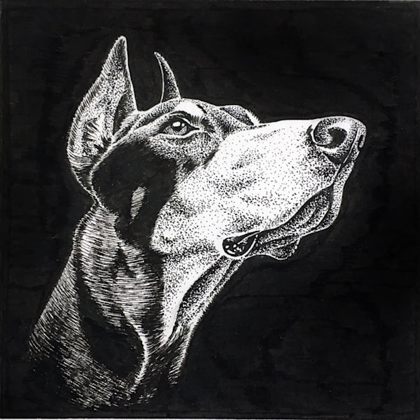 Pen and Ink drawing of a Doberman