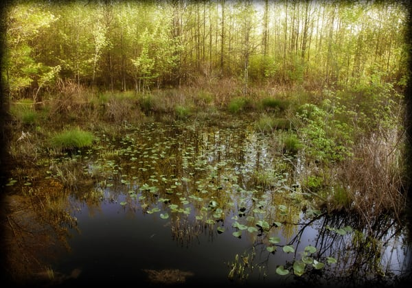 Spring in the Swamp