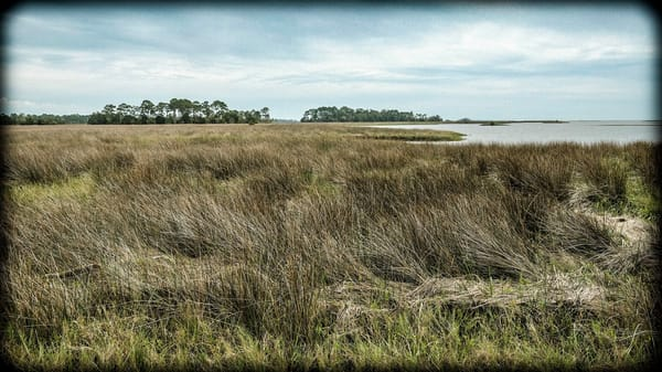 Field And Distant Sky Photography Art | David Frank Photography