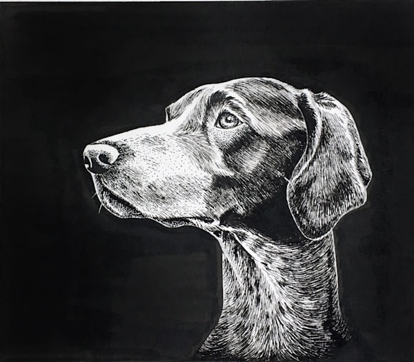 Pointer pen and ink study