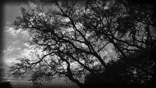 Clouds Caught In Trees Photography Art | David Frank Photography