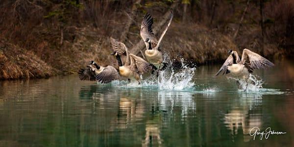 Fly Away Home Photography Art | Gary Johnson Photography