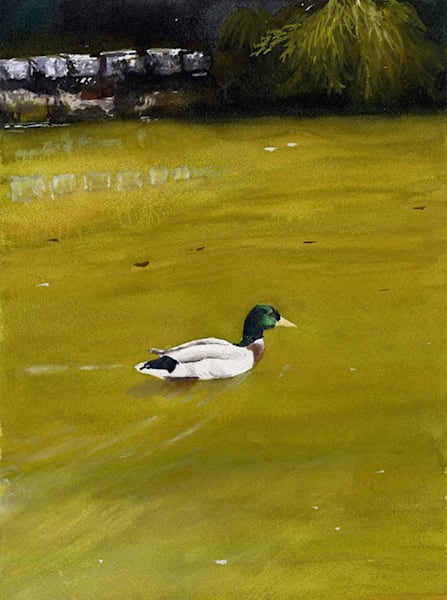 Tranquil Swimming Duck in a Pond Original Fine Art