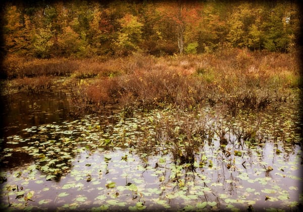 Great Swamp Autumn