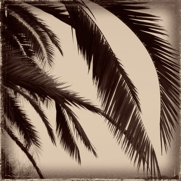 palm fronds in the breeze