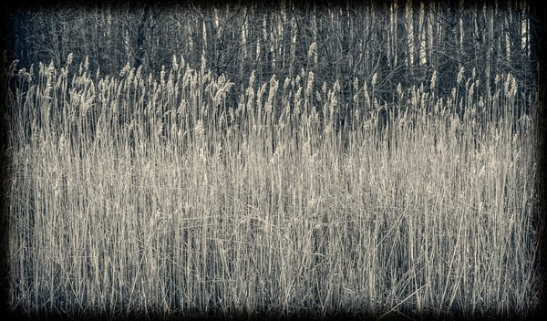 Reeds And Woods Photography Art | David Frank Photography