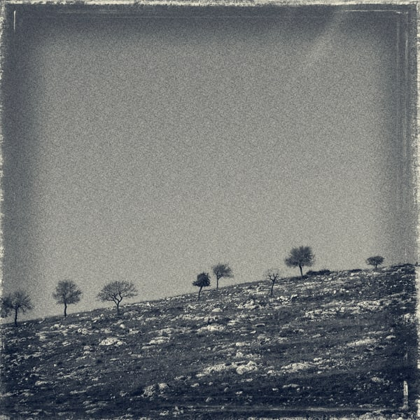 six trees on hill