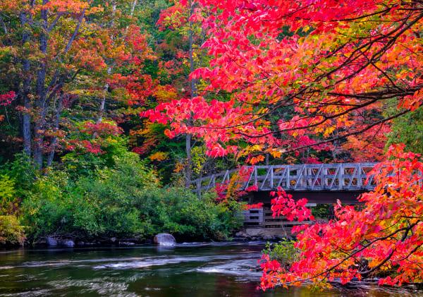 Fall In Muskoka Art | Andrew Collett Photography