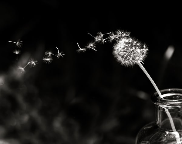Wishes - Black and White Fine Art Photograph Print for Sale