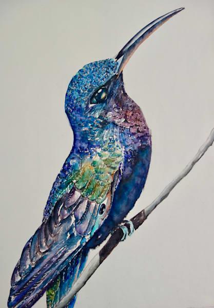 Frank the Hummingbird