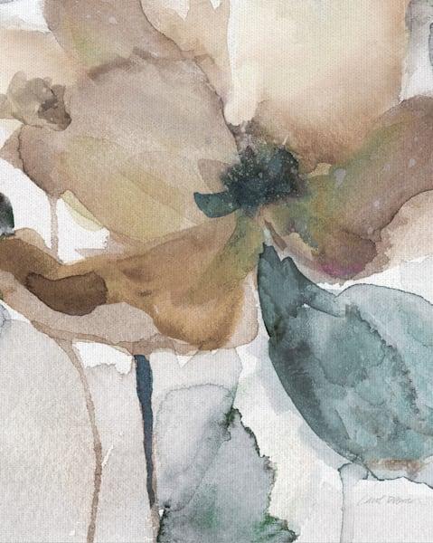 Watercolor Poppy I Canvas Art by Carol Robinson