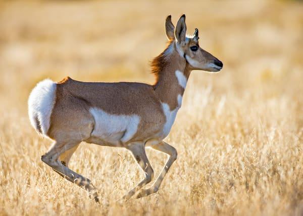 Run Antelope Run Art | Third Shutter from the Sun Photography