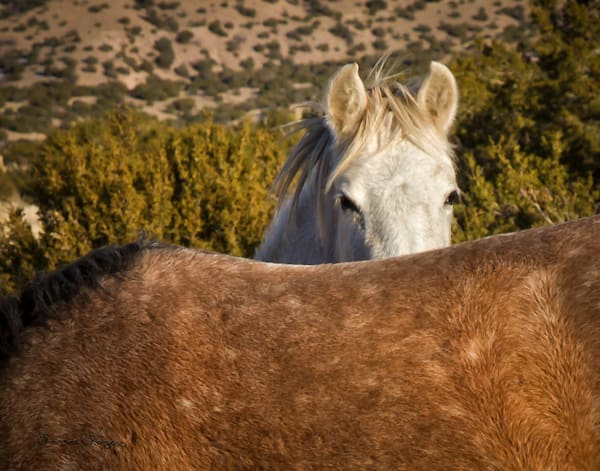 Wild Horse Peek A Boo Art | Third Shutter from the Sun Photography