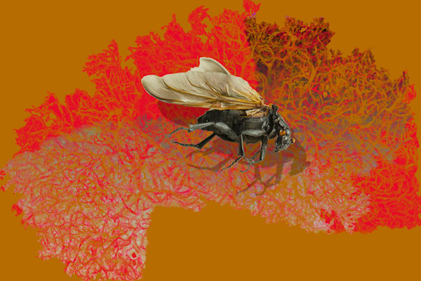 A one of a kind photo of a wasp. I discovered it flying in my kitchen one day.