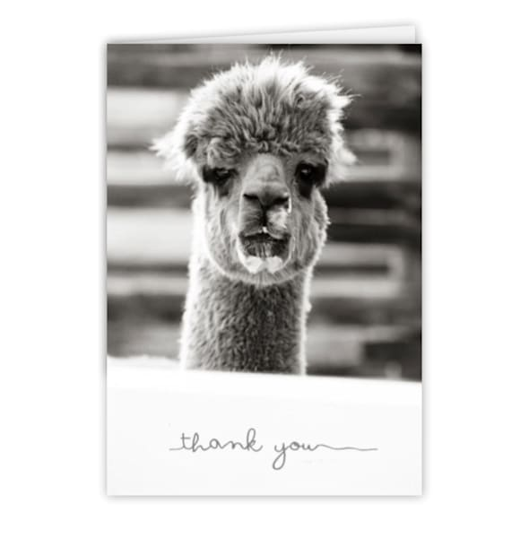 BLACK AND WHITE ALPACA THANK YOU CARD