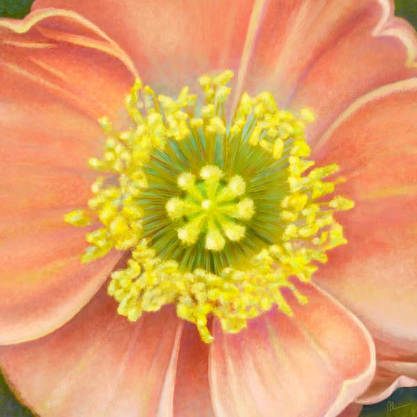 CJ's Poppy is an art print by the artist, Mary Ahern.