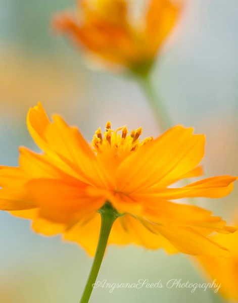 Bring Me A Little Sunshine  Art | AngsanaSeeds Photography