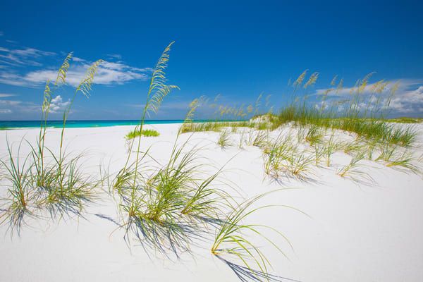 Golden Sea Oats on Pensacola Beach along the Emerald Coast of Florida - Fine Art Prints on Canvas, Paper, Metal, & More | Waldorff Photography