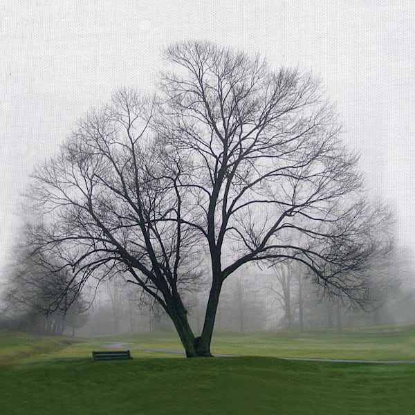 Tree Solo by Artist Mary Campanga Wrapped Canvas Photo Graphic Art Print