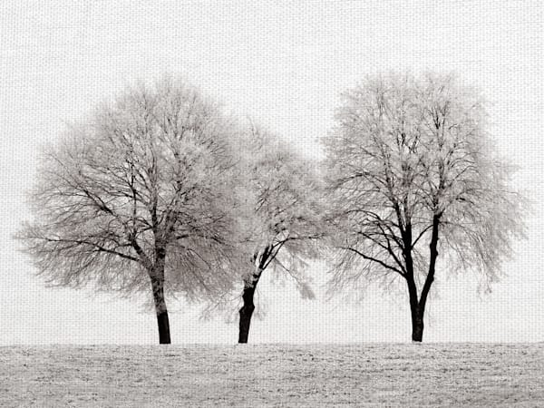 Three Trees by Artist Ilona Wellmann Wrapped Canvas Photo Graphic Art Print