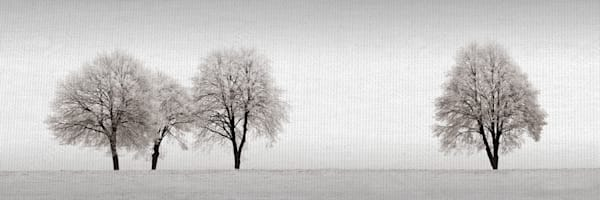 Tree Line by Artist Ilona Wellmann Wrapped Canvas Photo Graphic Art Print