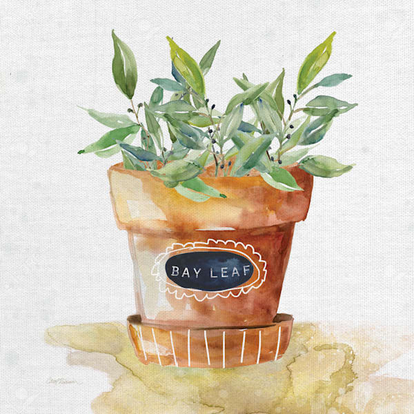 Potted Bay Leaf by Artist Carol Robinson Wrapped Canvas Painting Art Print