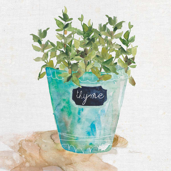 Potted Thyme by artist Carol Robinson Wrapped Canvas Painting Art Print