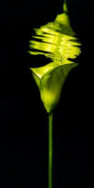 Green Cala Lily Underwater