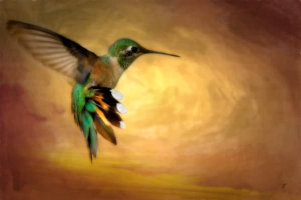 Hummingbird In Flight No 2