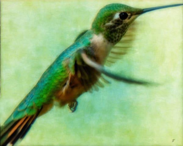 Fine Art Hummingbird Photograph