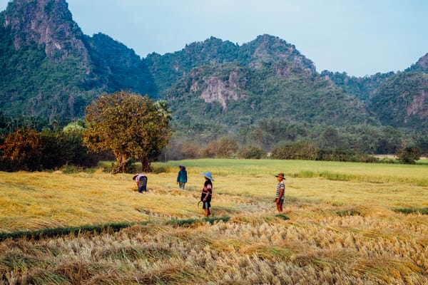 Fine Art Prints, Burmese Harvest in Golden Fields, Hpa An, Burma