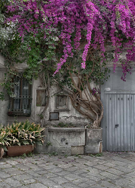 Bougainvillea Di San Ferdinando Photography Art | Michael Sandy Photography