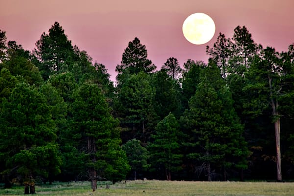 Full Moon in the Pines