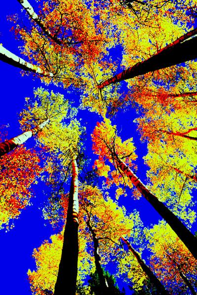 Autumn Sky View