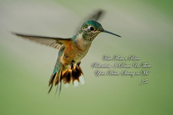 Hummingbird in Flight #3, Nanette's Poem