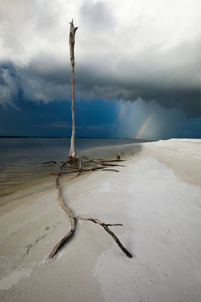Skeleton tree and rainbow near Navarre Beach along the Emerald Coast of Florida | Fine Art Prints on Canvas, Paper, Metal, & More | Waldorff Photography