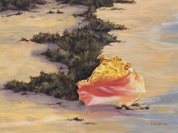 Beached Conch Art | J. Medeiros Fine Art