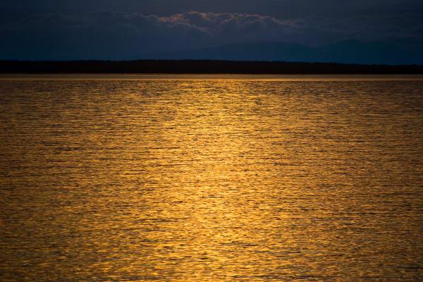 Golden Seas Art | James Alfred Friesen