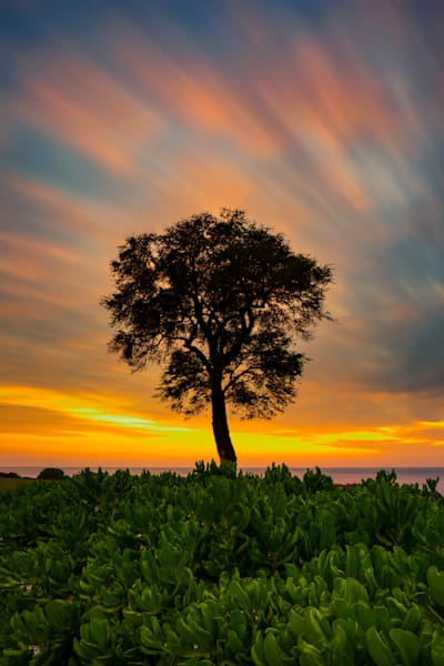 Hawaii Nature Photography | Tree of Paradise by Peter Tang