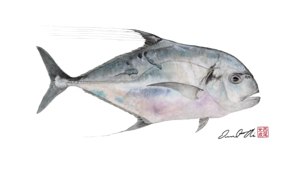Traditional Gyotaku Paintings | Kagami Ulua by Desmond Thain
