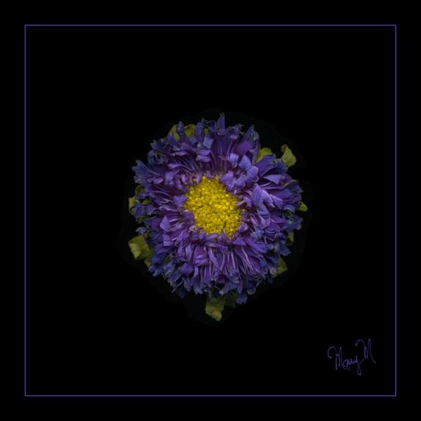 Flowers Purple Haze Art | FortMort Fine Art