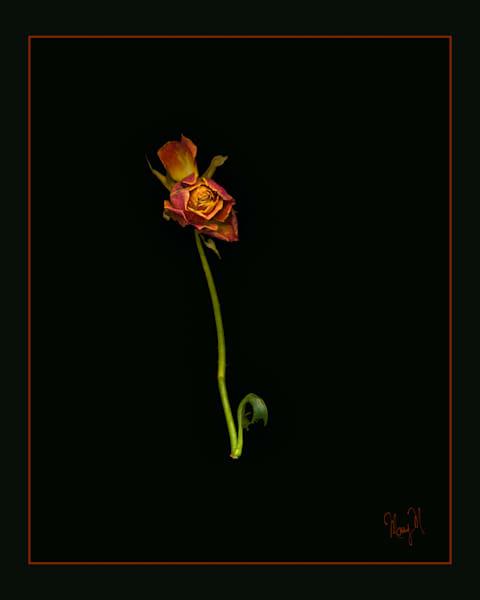 Flowers Curly Art | FortMort Fine Art