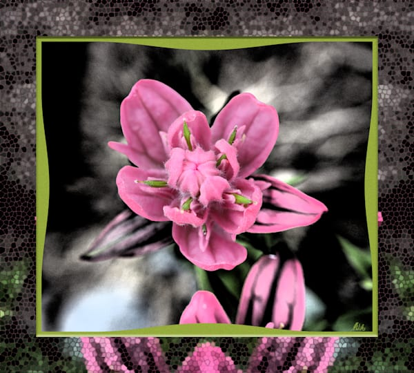 Rosy Paintbrush No. 2 in Upper Ross basin print of photograph transformed into digital art for sale by Maureen Wilks