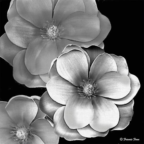 Black & White Magnolia by artist Frannie Funn Canvas Art Print