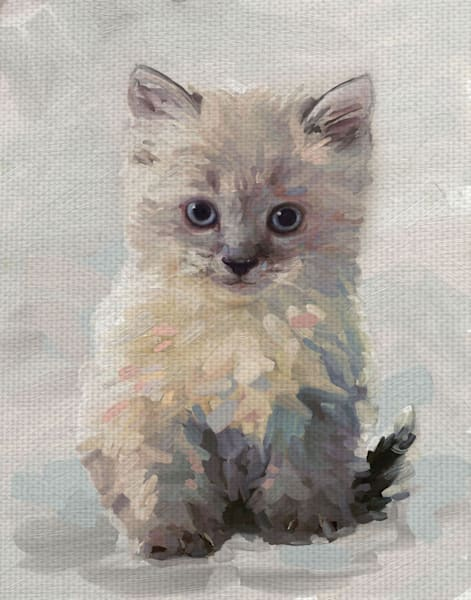 Pretty Kitty I by Studio Arts Wrapped Canvas Art Print
