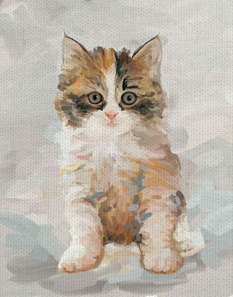 Pretty Kitty II by Studio Arts Wrapped Canvas Art Print