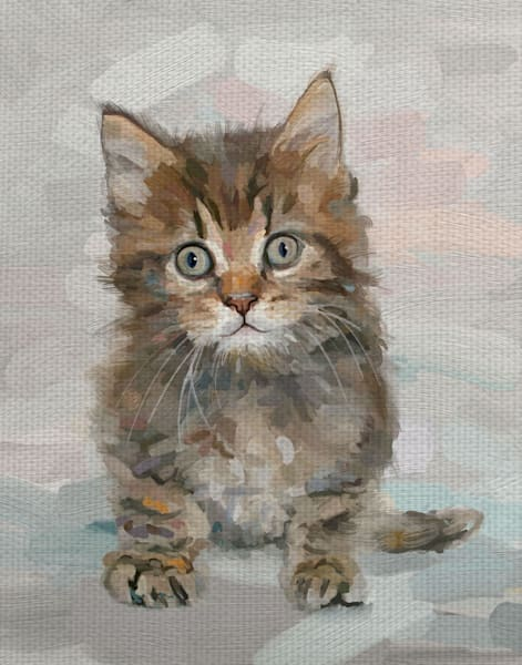Pretty Kitty IV by Studio Arts Wrapped Canvas Art Print